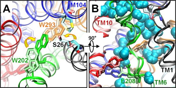 Protonation of glutamate 208 induces the release of agmatine