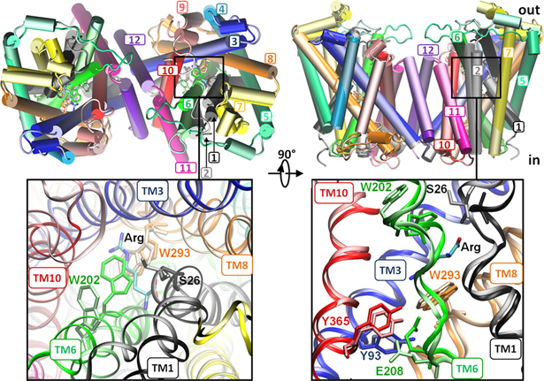 Protonation of glutamate 208 induces the release of agmatine in an