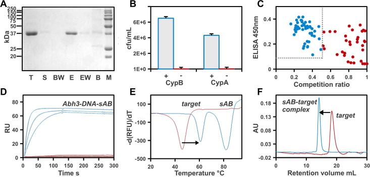 Antigen Shift Primary Causation