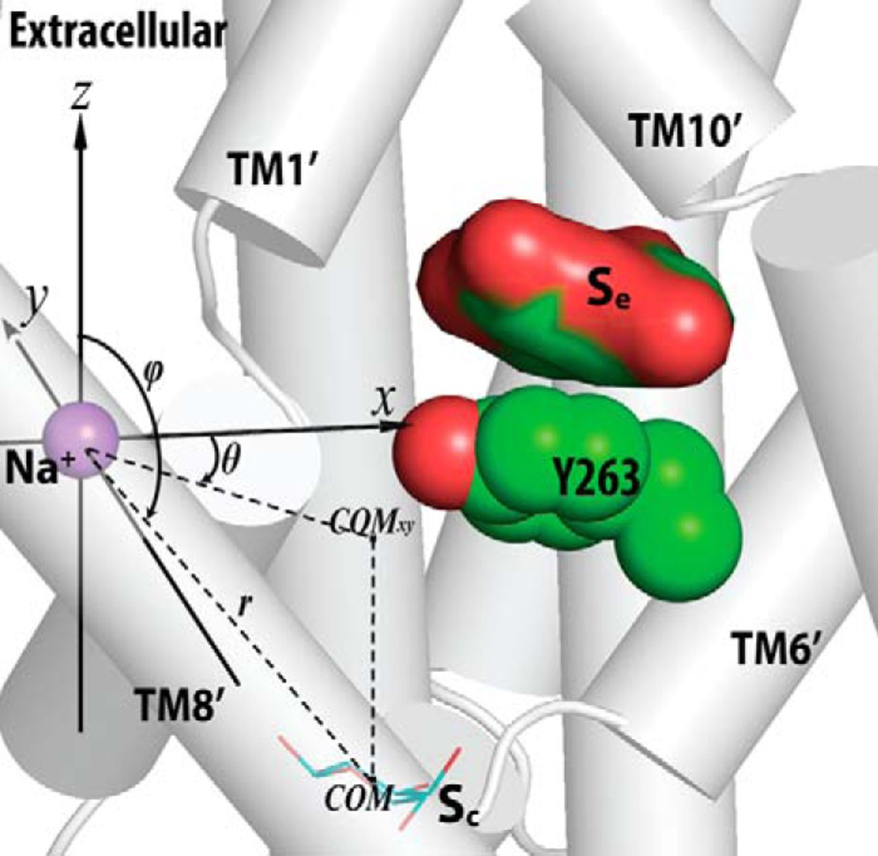 Identification Of A Second Substrate-binding Site In