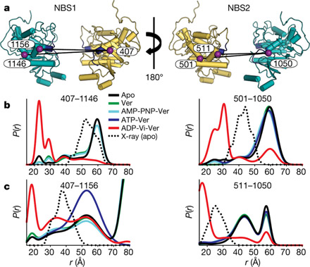 Energy transduction and alternating access of the mammalian ABC transporter P-glycoprotein